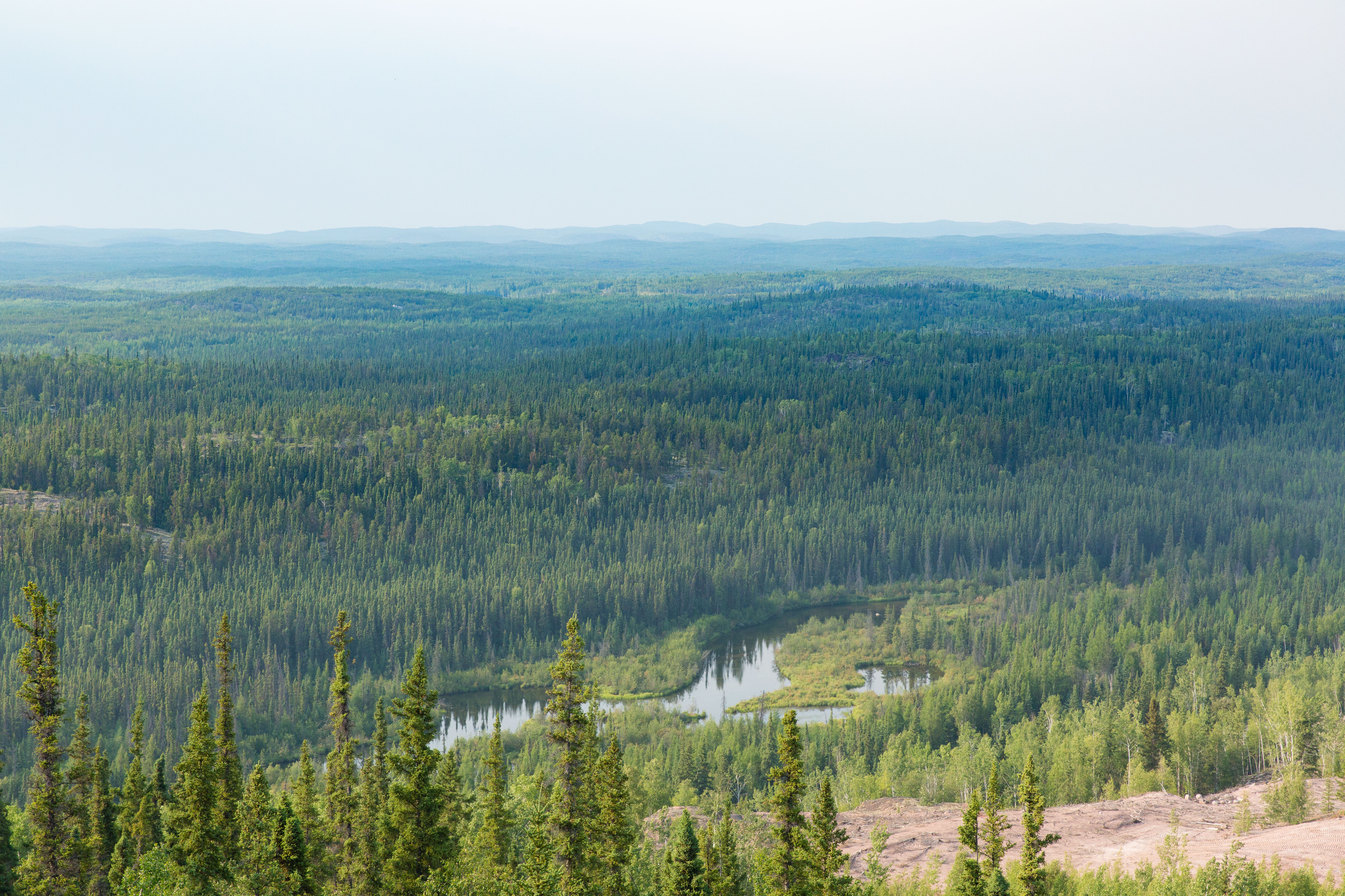 northern canadian boreal forest