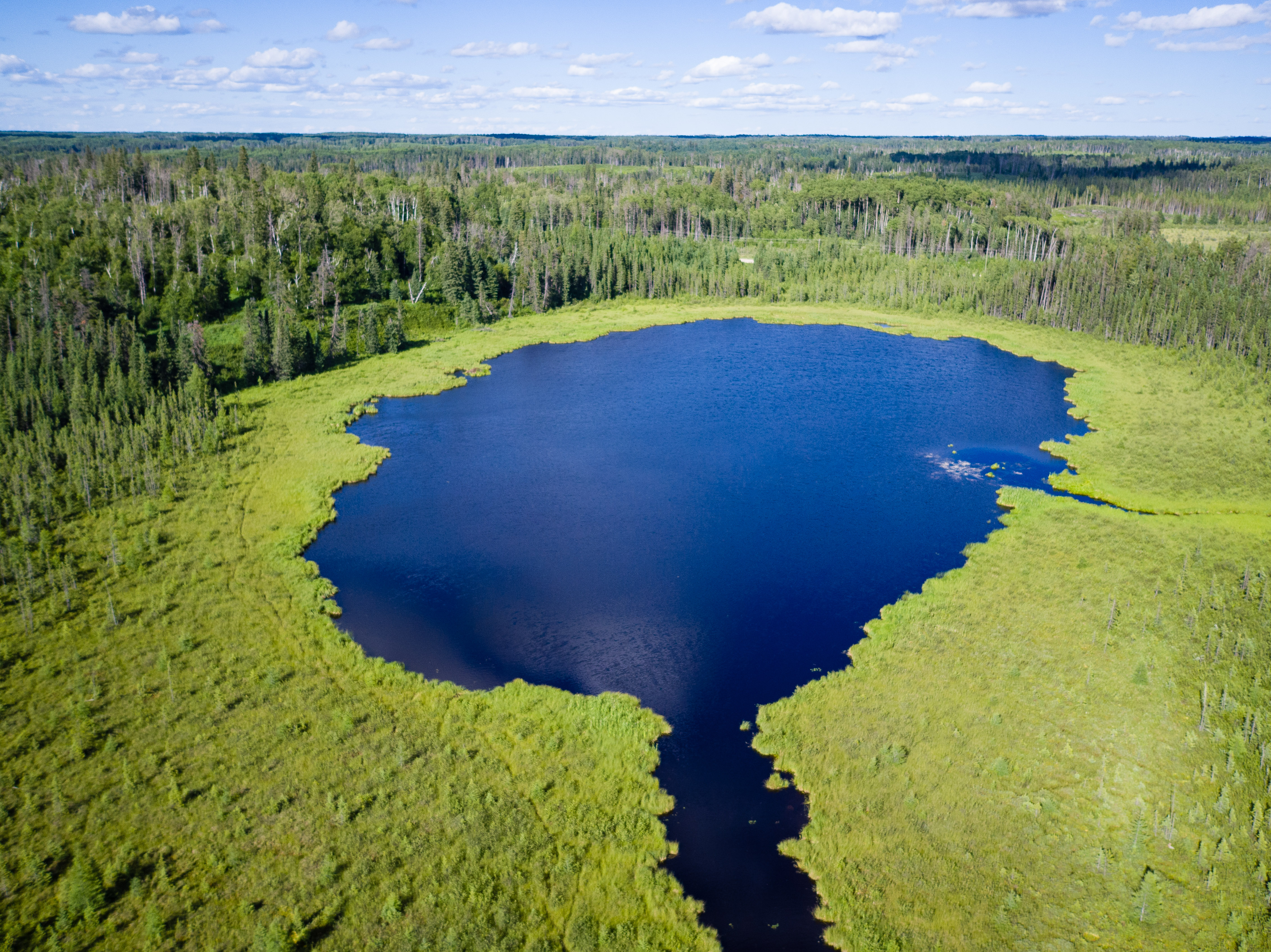 Why We Need to Learn More About How Wetlands Store Carbon ...