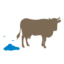 cow with manure