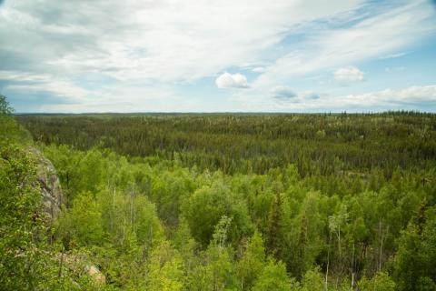 forest area in northern saskatchewan
