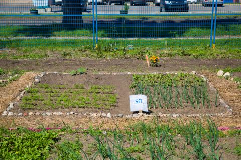 food bank garden plot