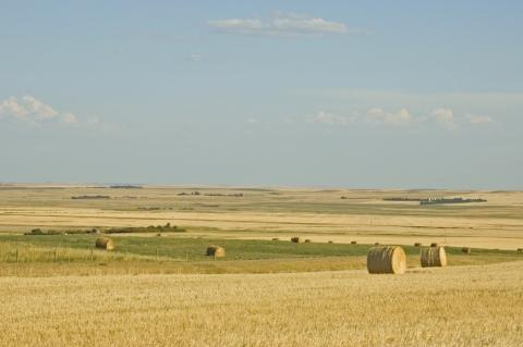 field in saskatchewan