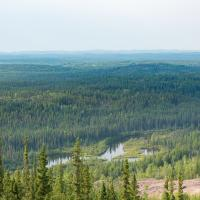 Northern boreal forest