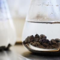 beakers with black clumps suspended in water